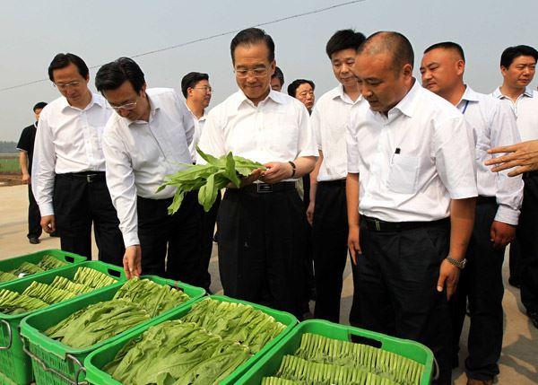 天和供港澳万亩蔬菜基地